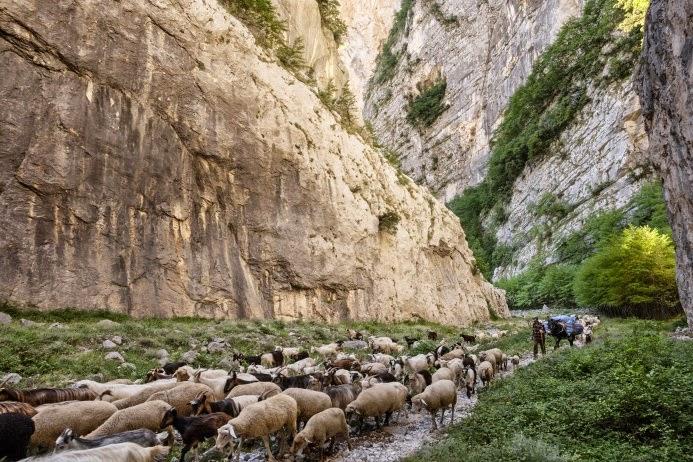 пастух из италии