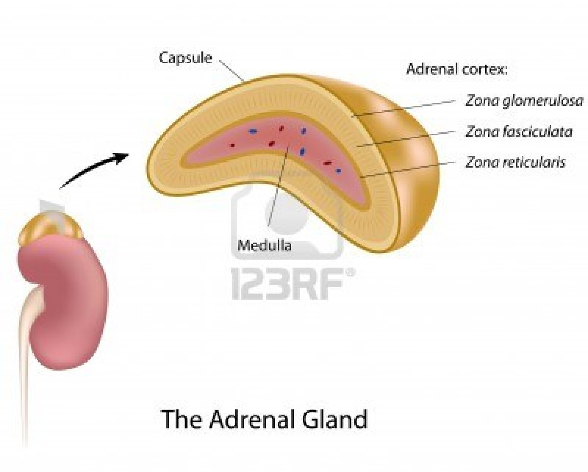 secondary adrenal insufficiency due to steroid use