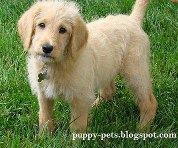Puppy Pets Pictures