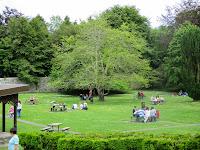 Coole Park - O Parque dos intelectuais /The Park of the Intelectuals