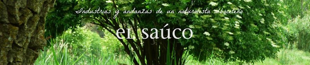El Saúco