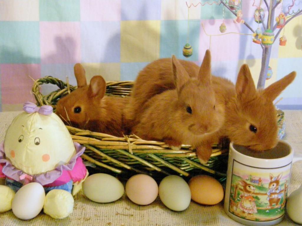 http://1.bp.blogspot.com/-lFJKViP-qAQ/Tz_RbnCxGYI/AAAAAAAADZQ/X1cdTq5j5vg/s1600/Easter-Bunny-Basket-Wallpapers.jpg