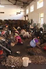 Arya Cashew Factory