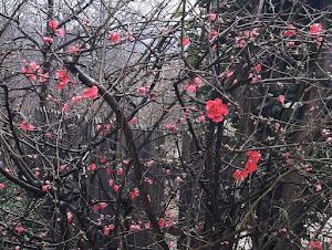 Flor del mes