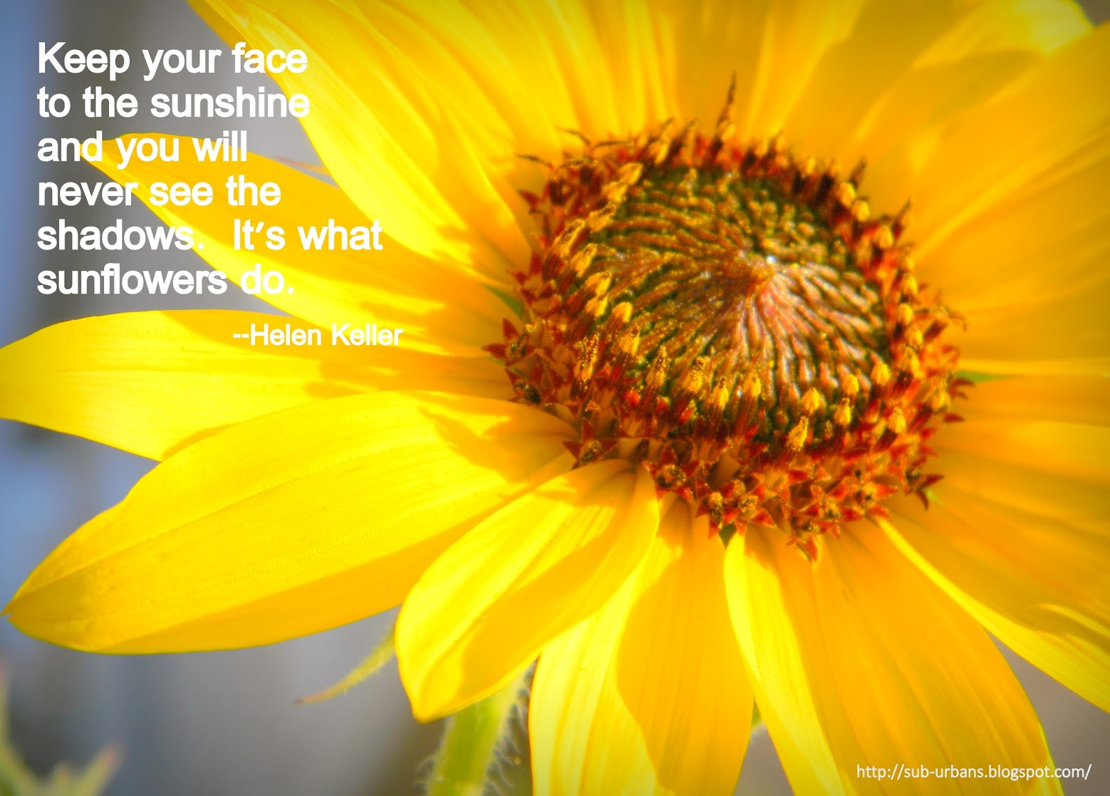 Quotes About Love And Sunflowers. QuotesGram