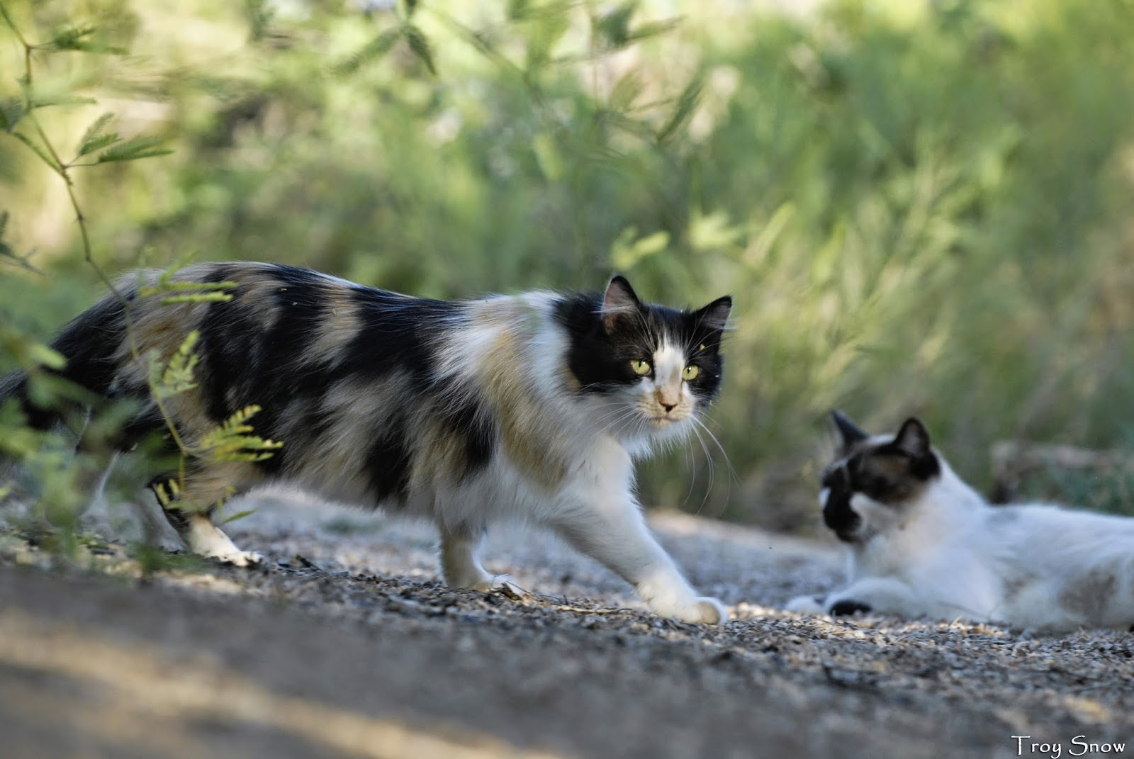 alley cat rescue inc   an alliance for cat protection