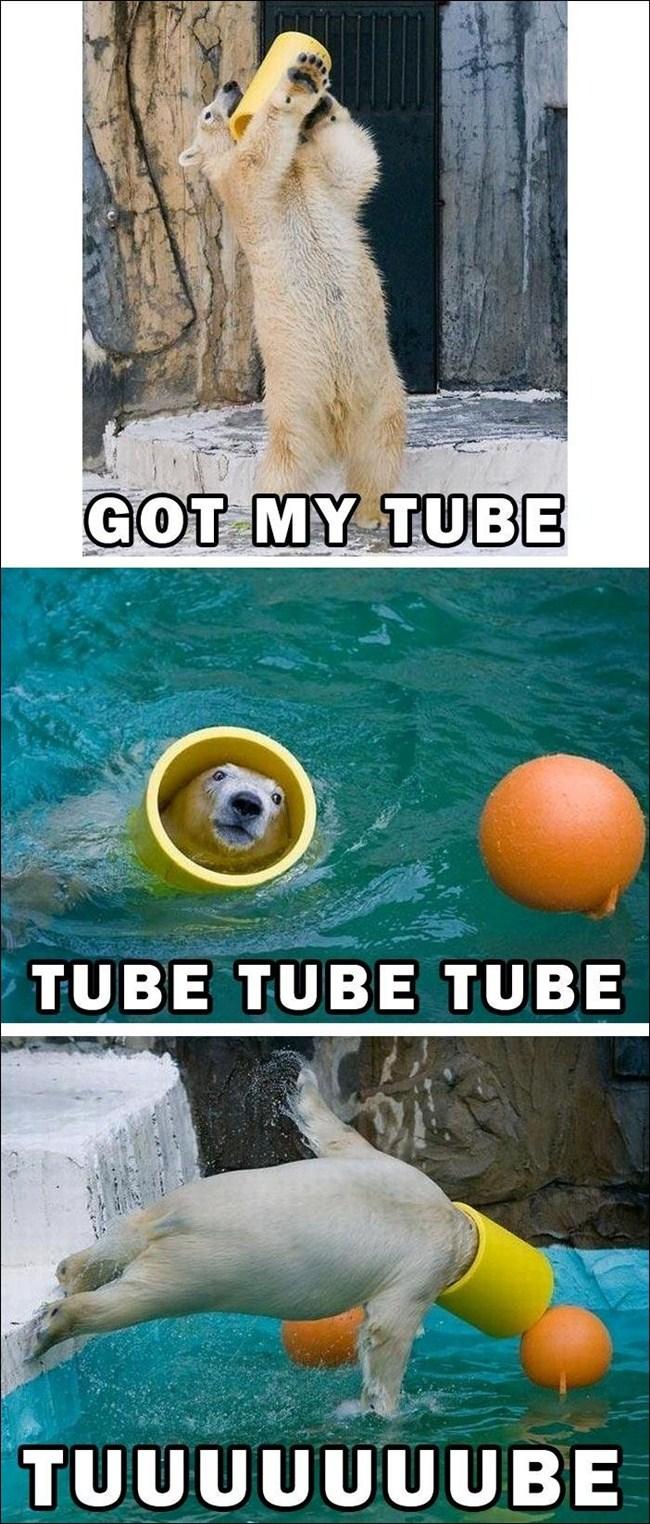 Funny polar bear and his tube, funny animals, cute animals, funny polar bear