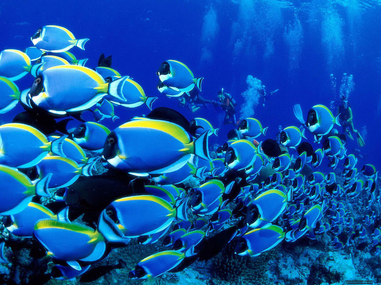 Hd wallpapers for Reef aquarium fish