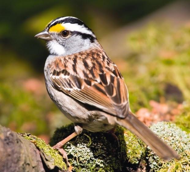 Wild Birds Unlimited: Abril de 2015