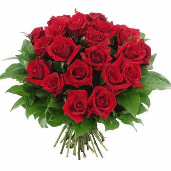 rosas de amor. Las rosas rojas eran sus