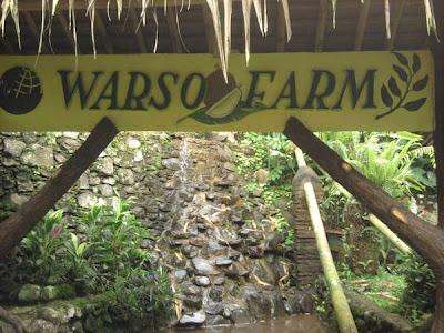 Warso Farm Bogor Tempat Wisata Kebun Durian