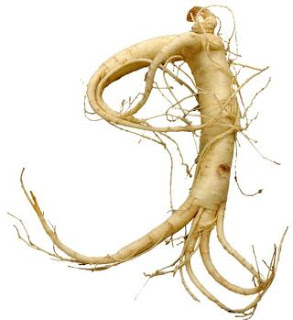 Panax ginseng can increase the efficiency of the immune system.
