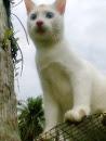 en putih =)