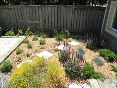 Leslieville Toronto xeriscape garden install after by Paul Jung Gardening Services