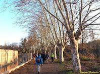 """El camí avança entre grans plàtans i el canal de la colònia. Autor: Francesc """"Camonaire"""""""