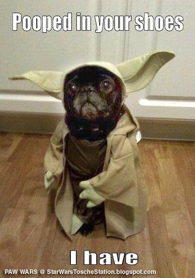 Star Wars Yoda doggie