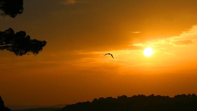 Bird Sunset Sky HD Wallpaper