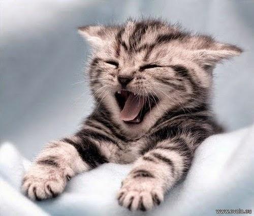 Belles images chats drôles