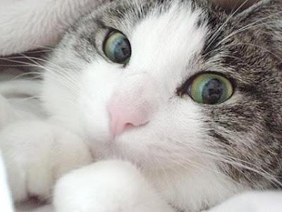 Los beneficios energéticos de tener un gato