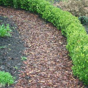 Am nagement paysager et conseil en jardinage prot ger ses for Conseils en jardinage