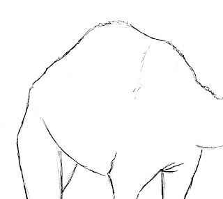 draw camel hump
