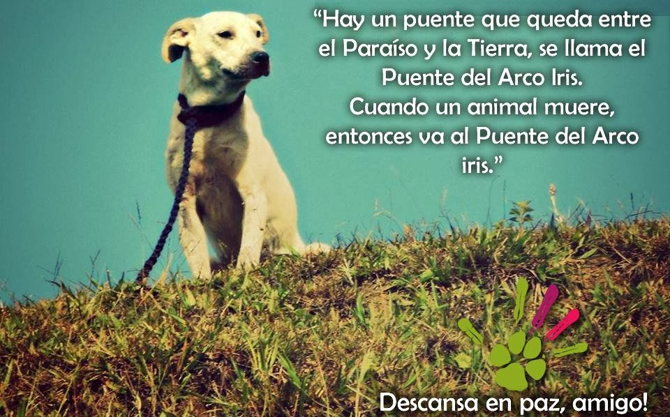Imagenes Lindas Para Compartir Fb: Imagenes De Perros Con Frases De