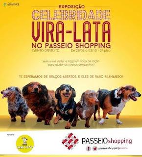 Passeio Shopping recebe exposição fotográfica 'Celebridade vira-lata'