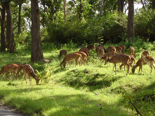 The Mudumalai National Park and Wildlife Sanctuary also a declared tiger reserve, lies on the northwestern side of the Nilgiri Hills, in Nilgiri District