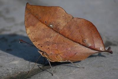 Insectos hoja