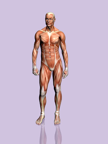 Our body is amazing You can run and jump using your muscles