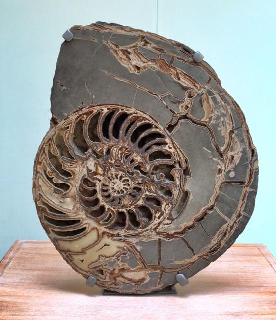 Gran fósil en el Museo de Historia Natural de Londres