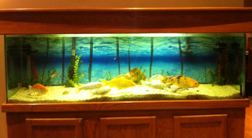 290 :: 125 Gallon Fish Tank! Yollis 366 Project
