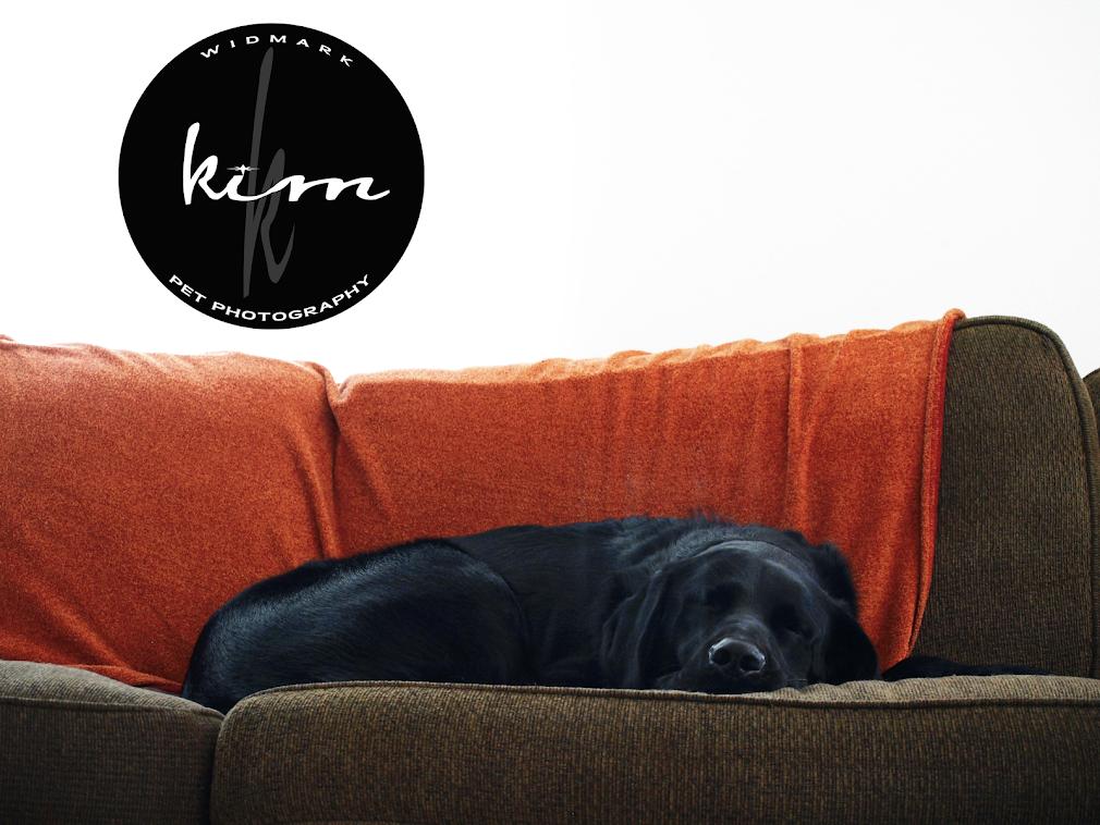 kimkWIDMARK/PET PHOTOGRAPHY