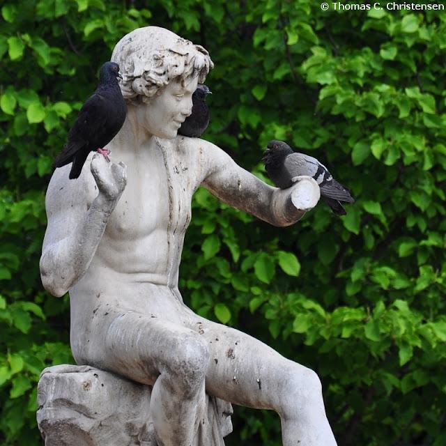 'Håndtamme' duer sidder på marmorstatue med hænderne brækket af