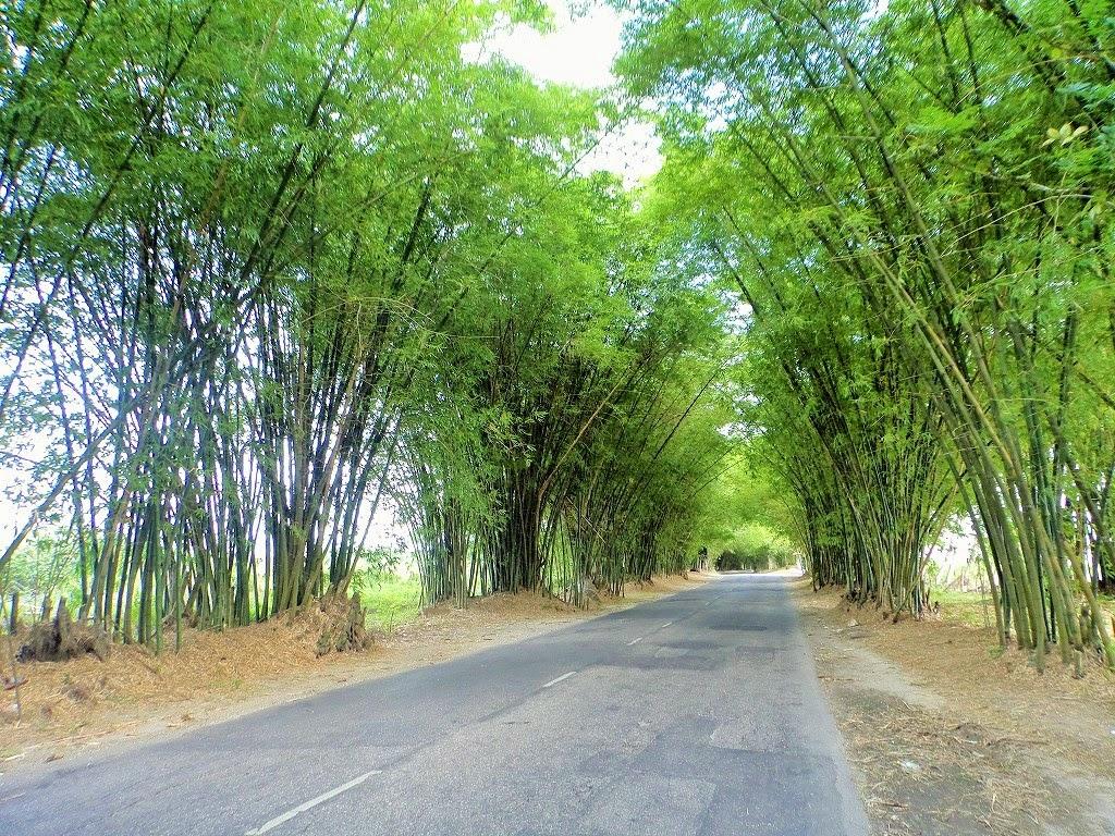 Ackee inna jamdung bamboo avenue for Ackee bamboo jamaican cuisine in leimert park