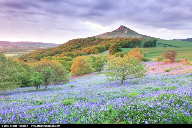 Roseberry Topping - Bluebells in Newton Wood