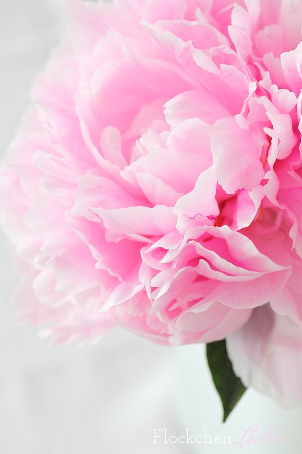 Flockchenliebe Rosa Rosa Rosa