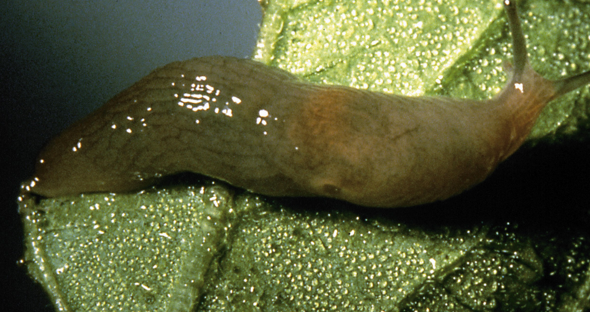 Dr Dan 39 S Garden Tips Sabotaging The Slug Society