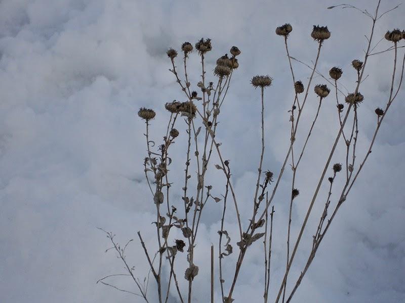 original prairie flowers - The Art of Prairie Flowers: hope of spring