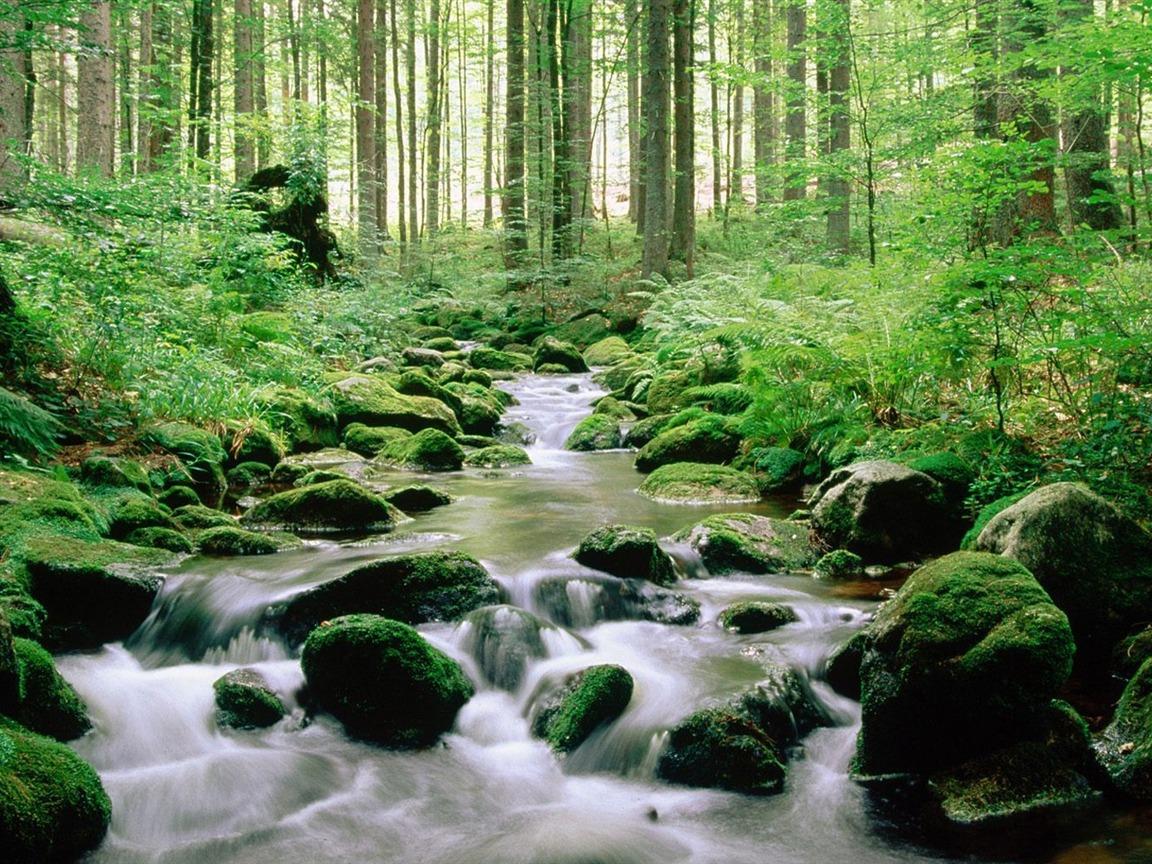 Travel Trip Journey: Bavarian Forest National Park Germany