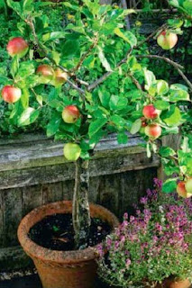 Easy Way Growing Fruit: Fruit Characters in Pot and Placement