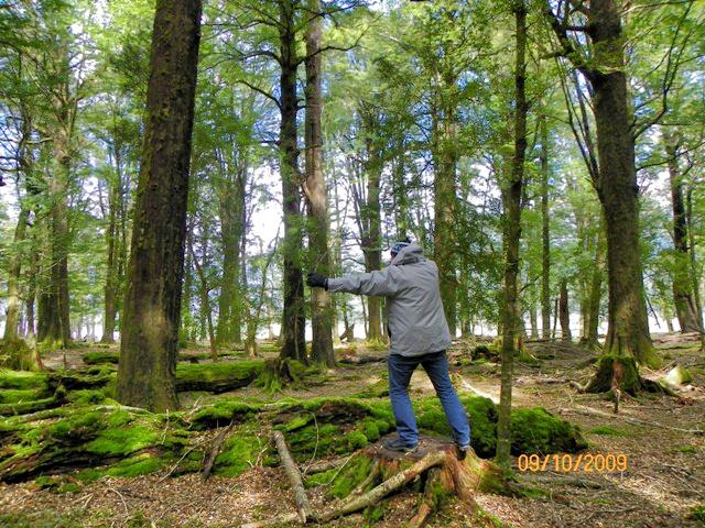 Elfo español en el bosque de Lothlorien