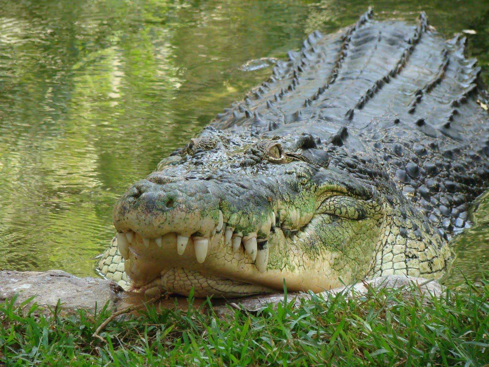 happy birthday croc bank