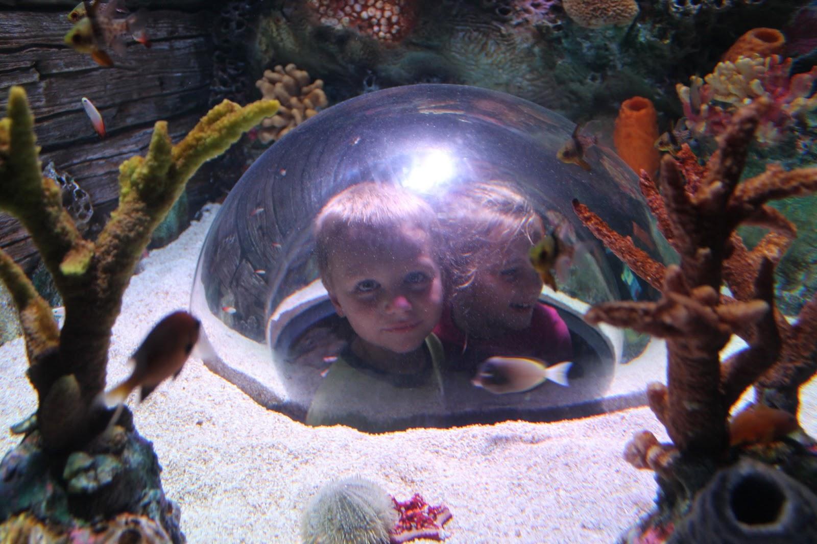 Adventures Among Us Sea Life Aquarium Kansas City Mo