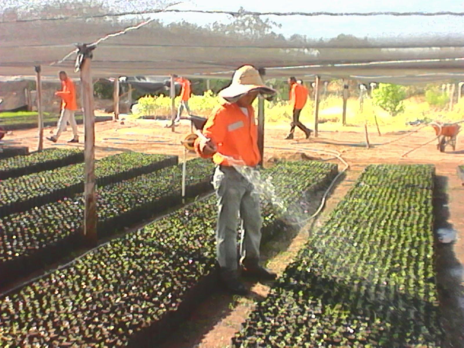 Tecnico manejo de vivero 2015 2016 sena for Materiales para un vivero