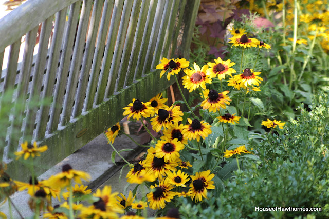 Black-eyed Susan at the Franklin Park Conservatory Community Garden