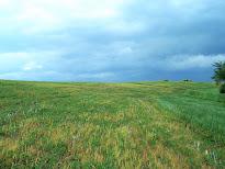 Farmland, 50th Ave., Baldwin 102.34 Acres