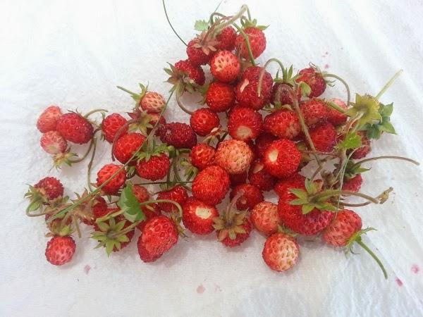 algunas fresas que hemos recogido