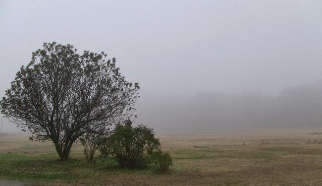 Photo - Fall Mist