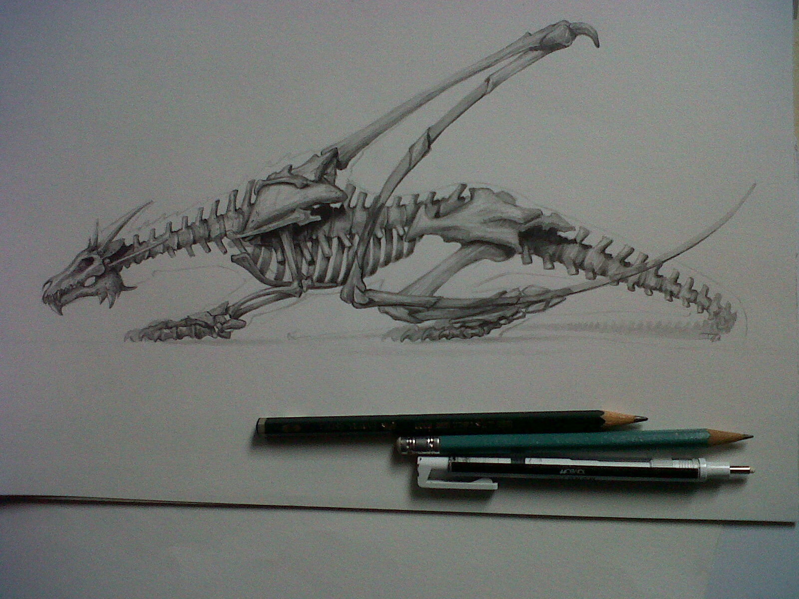 World of David De León Luis: Anatomy of bones of a Dragon, By David ...